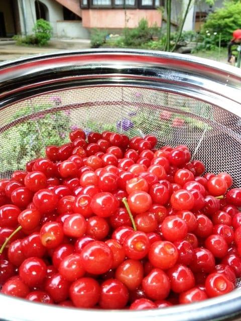 Cherry20121
