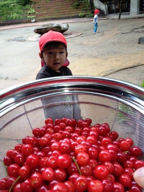 Cherry20123